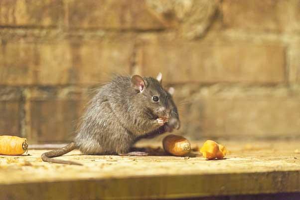 Крысиные бега фриланса